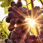 Vinovinia : la compagnie implantée en Alsace propose une boutique en ligne de vins