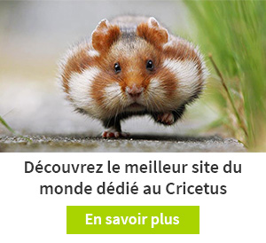 Annonce Cricetus 3x